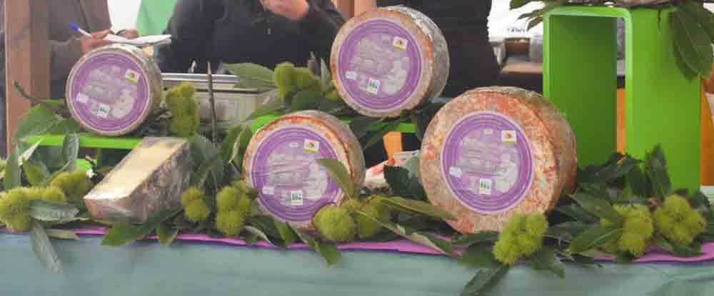 Feria del Queso de Cangas de Onis